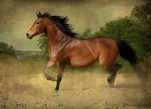 اروع واجمل الخيول في صور . خيول عربية horses9r.jpg